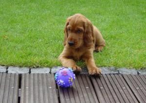 Amy mit Ball im Garten
